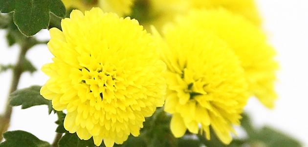 美咲(石原さとみさん)ドラマ着用衣装メモ【2話・黄色の浴衣】「ディア・シスター」