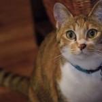映画「世界から猫が消えたなら」原作の感想ネタバレあり・評価悪いのはなぜ?