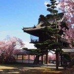 見事な桜の共演!長野県上田市「大輪寺」に行って来ました
