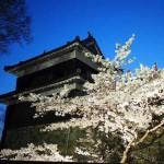 桜のライトアップ!「上田城跡公園」に行って来ました!クチコミ「平日なのに人いっぱい」